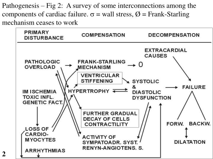 Pathogenesis – Fig 2:  A survey of some interconnections among the