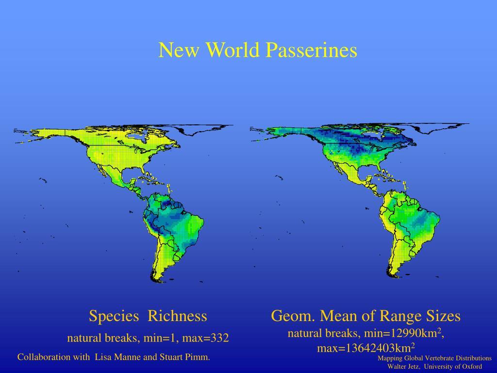 New World Passerines