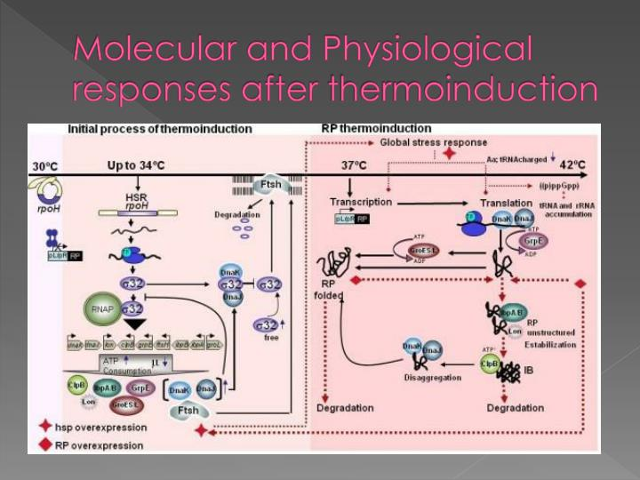 Molecular and Physiological  responses after