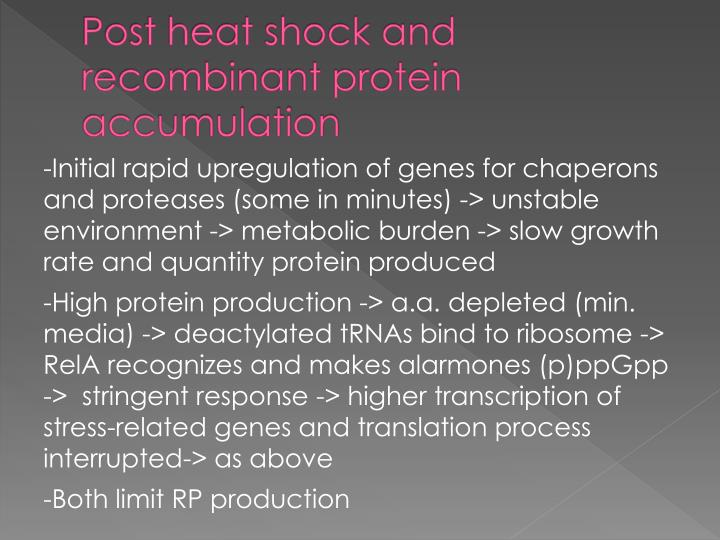 Post heat shock and recombinant protein accumulation