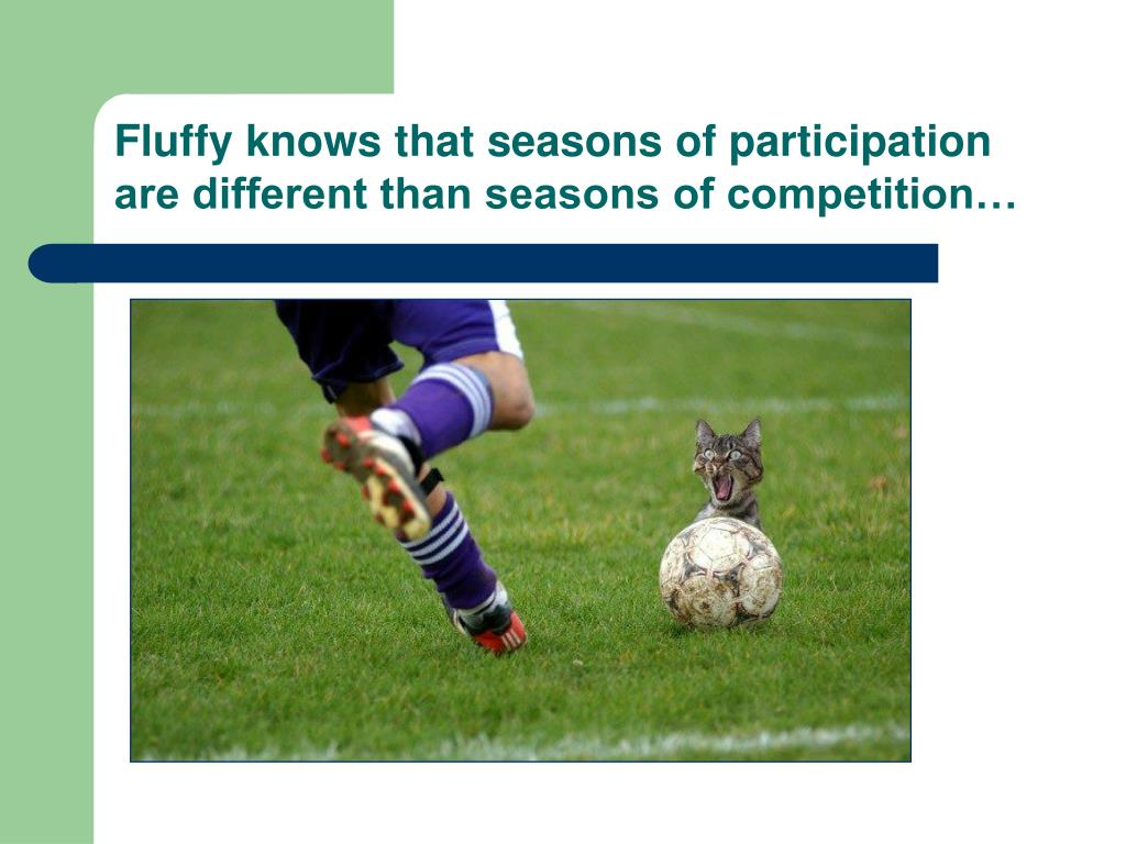 Fluffy knows that seasons of participation are different than seasons of competition…