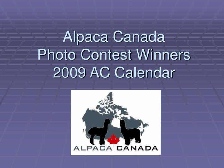 Alpaca canada photo contest winners 2009 ac calendar l.jpg