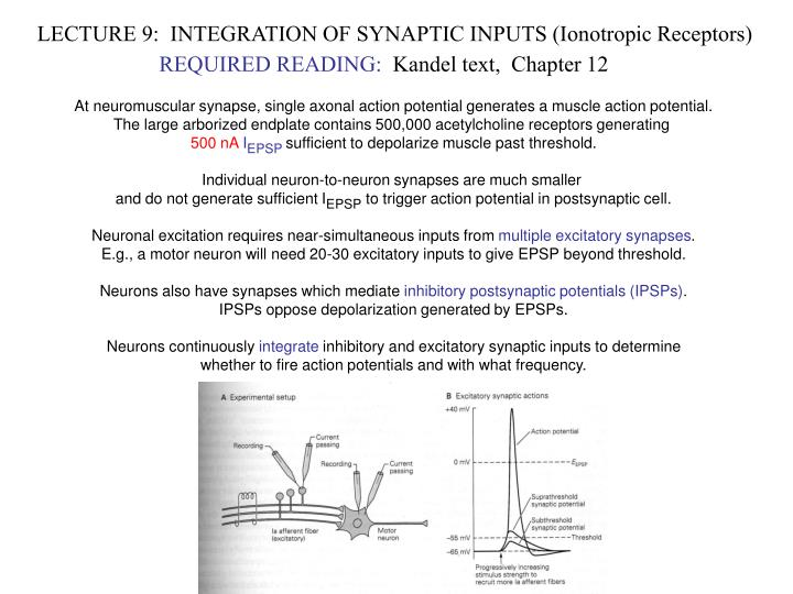 LECTURE 9:  INTEGRATION OF SYNAPTIC INPUTS (Ionotropic Receptors)