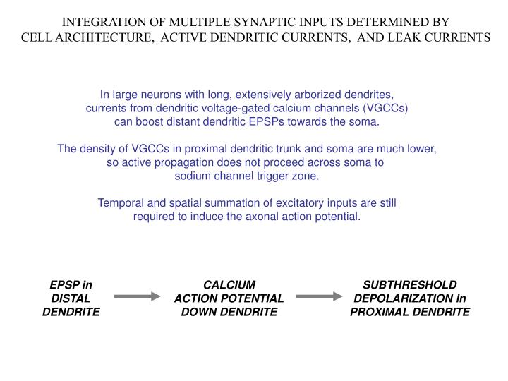 INTEGRATION OF MULTIPLE SYNAPTIC INPUTS DETERMINED BY
