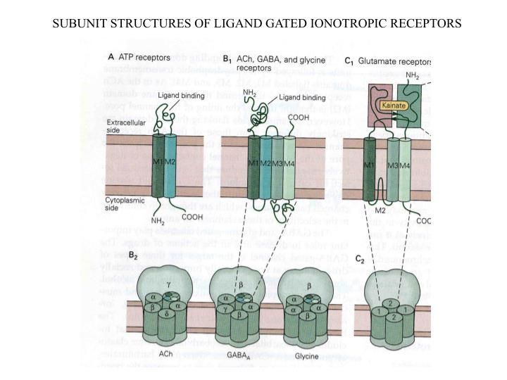 SUBUNIT STRUCTURES OF LIGAND GATED IONOTROPIC RECEPTORS