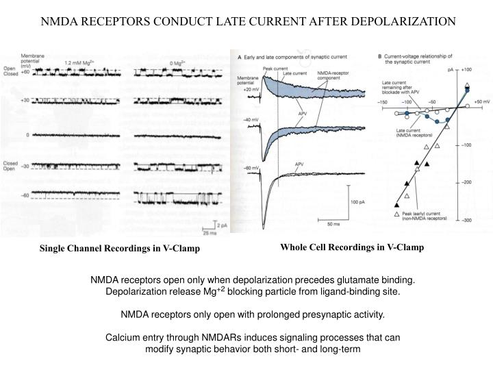 NMDA RECEPTORS CONDUCT LATE CURRENT AFTER DEPOLARIZATION