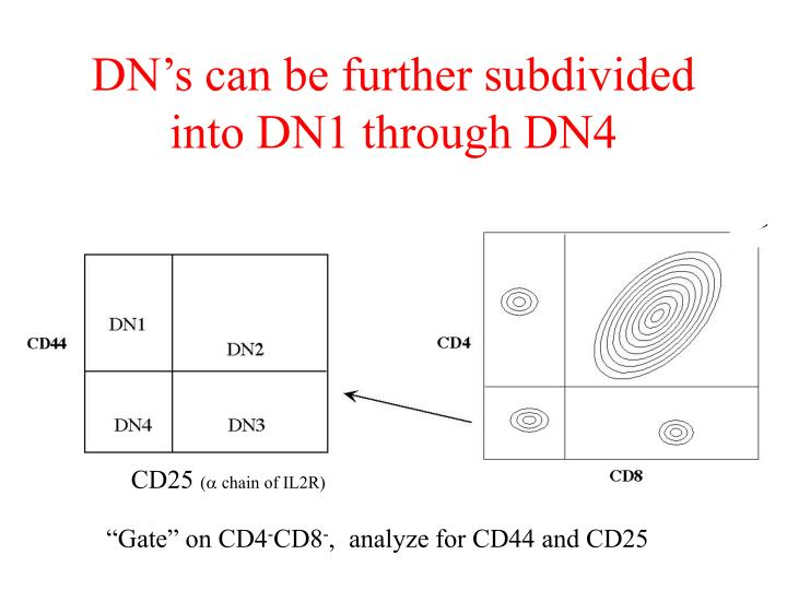 DN's can be further subdivided into DN1 through DN4