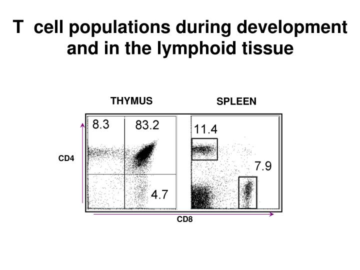 T  cell populations during development and in the lymphoid tissue