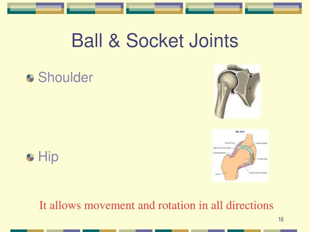 Ball & Socket Joints