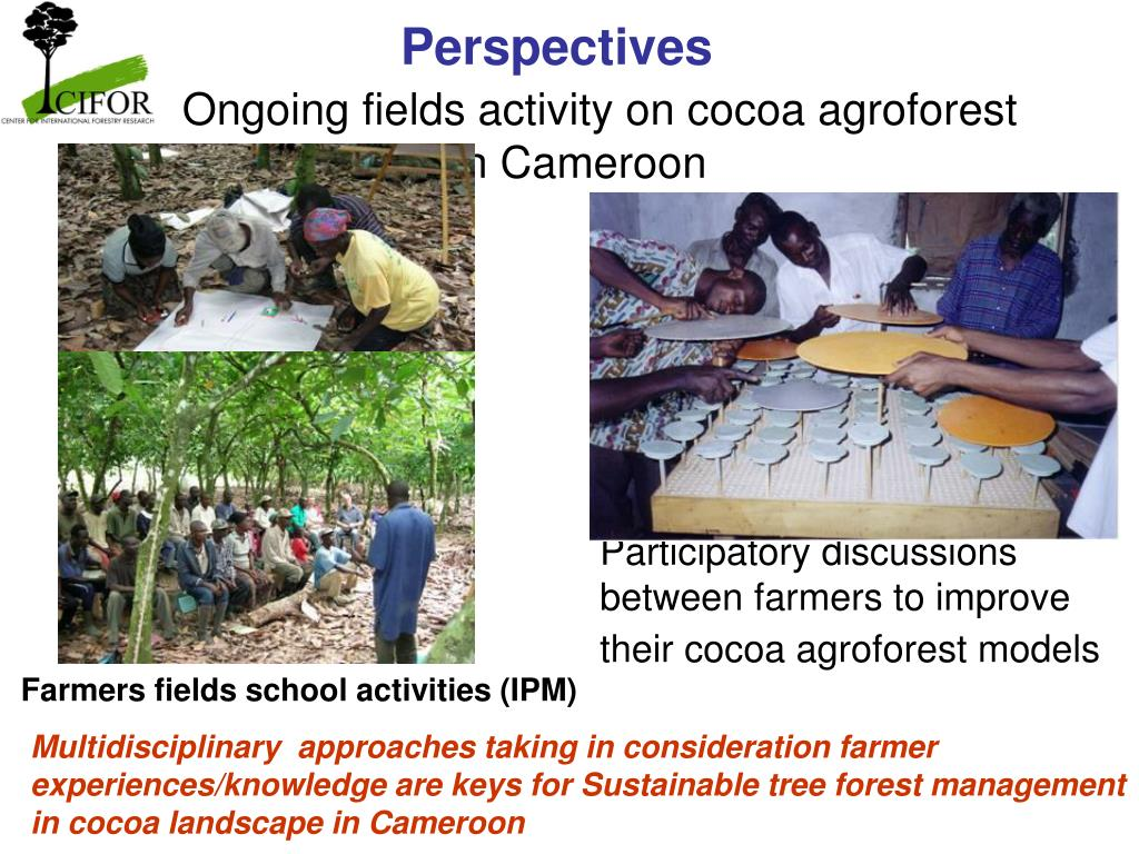 Ongoing fields activity on cocoa agroforest management in Cameroon