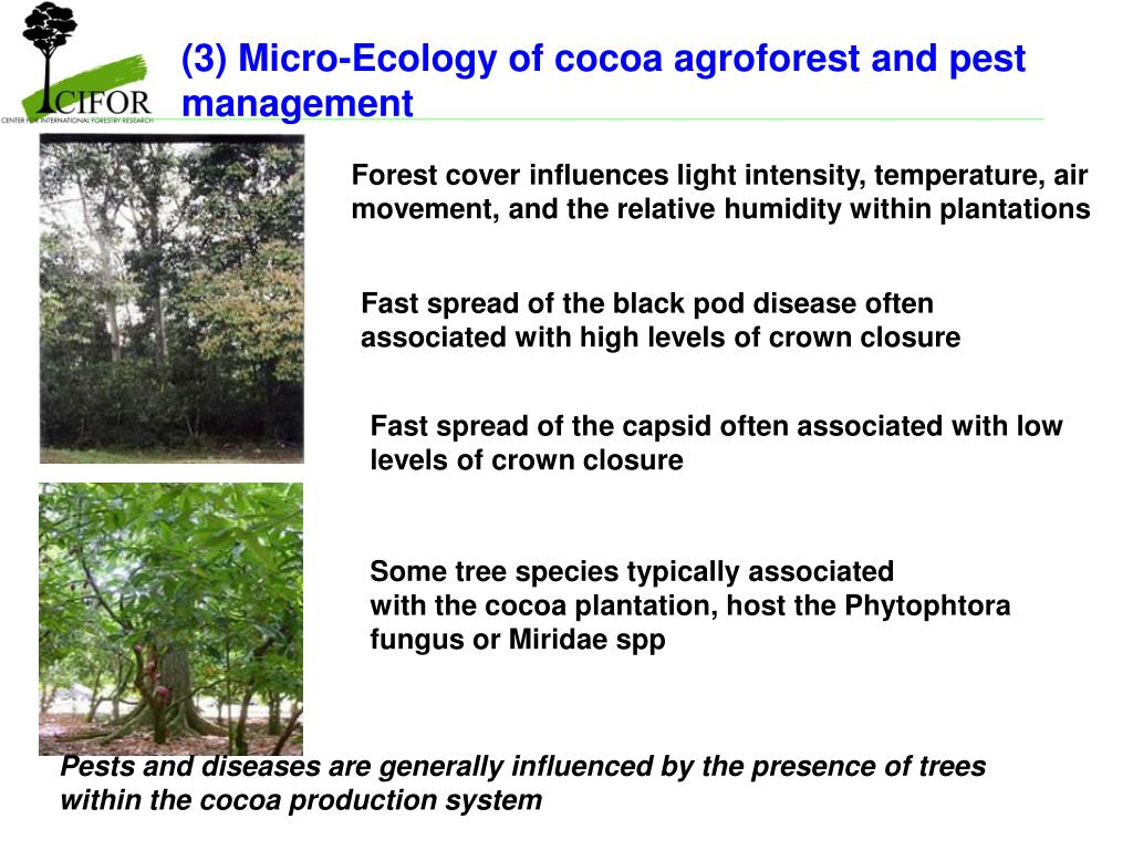 (3) Micro-Ecology of cocoa agroforest and pest management