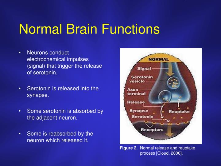 Normal Brain Functions