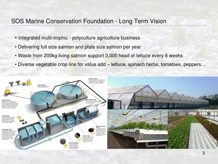 Sos marine conservation foundation long term vision