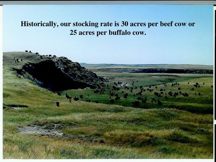 Historically our stocking rate is 30 acres per beef cow or 25 acres per buffalo cow l.jpg