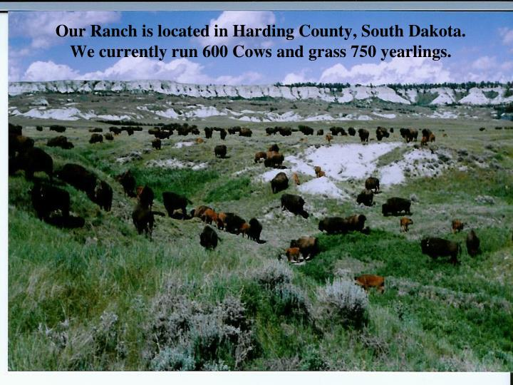 Our Ranch is located in Harding County, South Dakota. We currently run 600 Cows and grass 750 yearli...