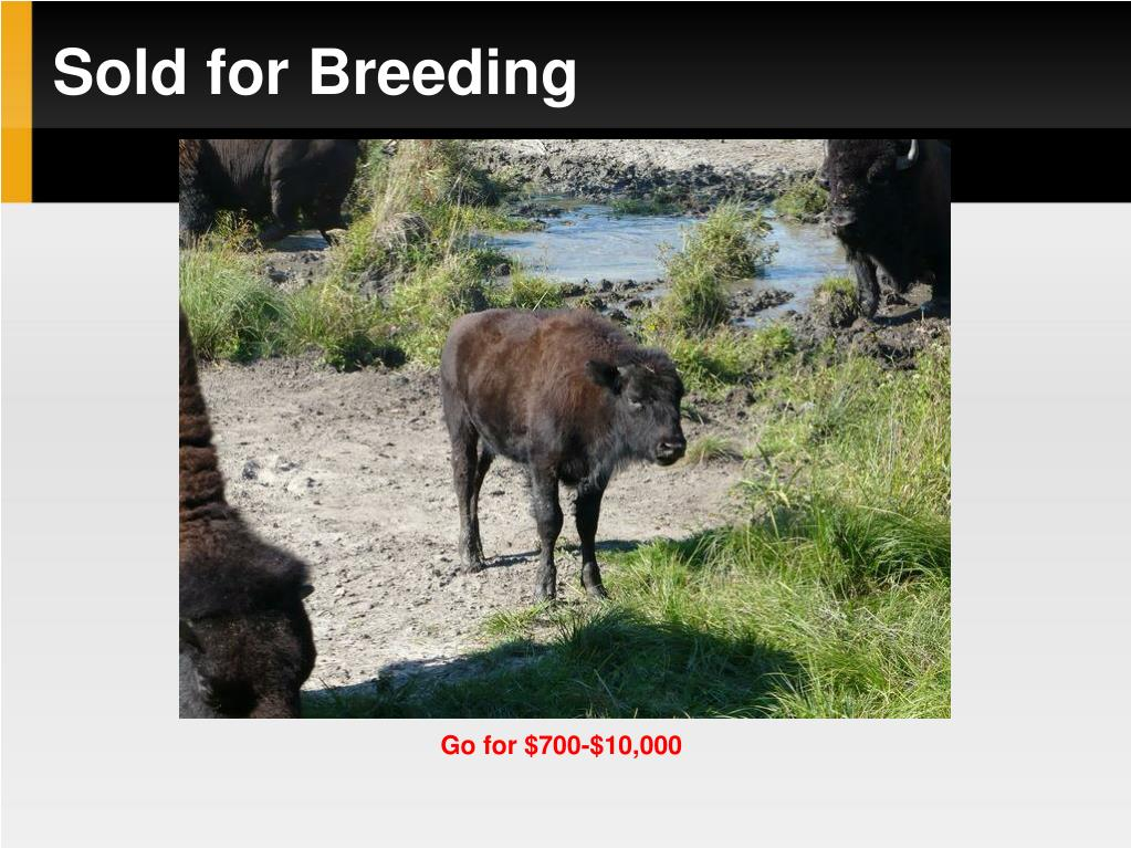 Sold for Breeding