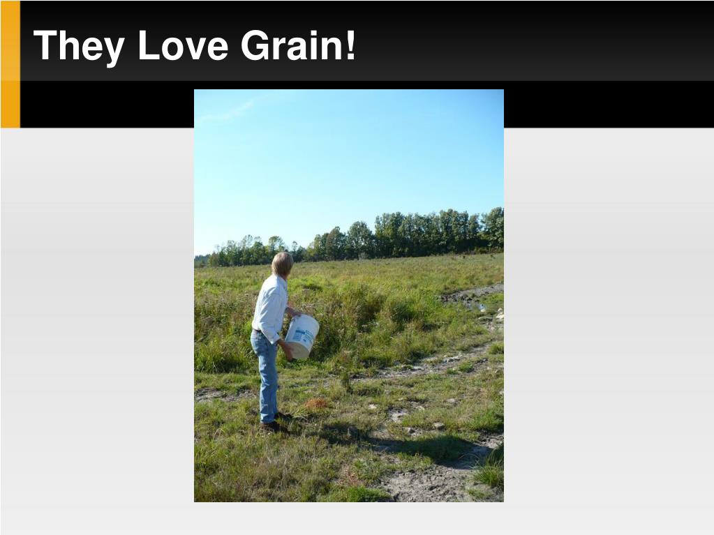 They Love Grain!