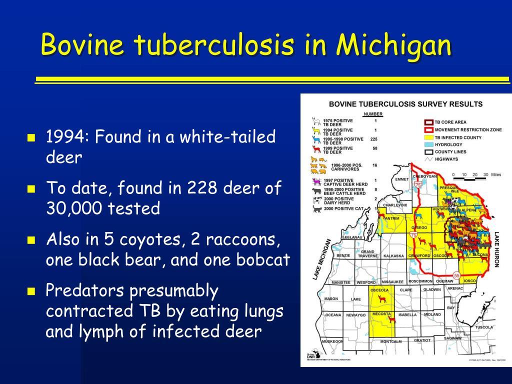 Bovine tuberculosis in Michigan