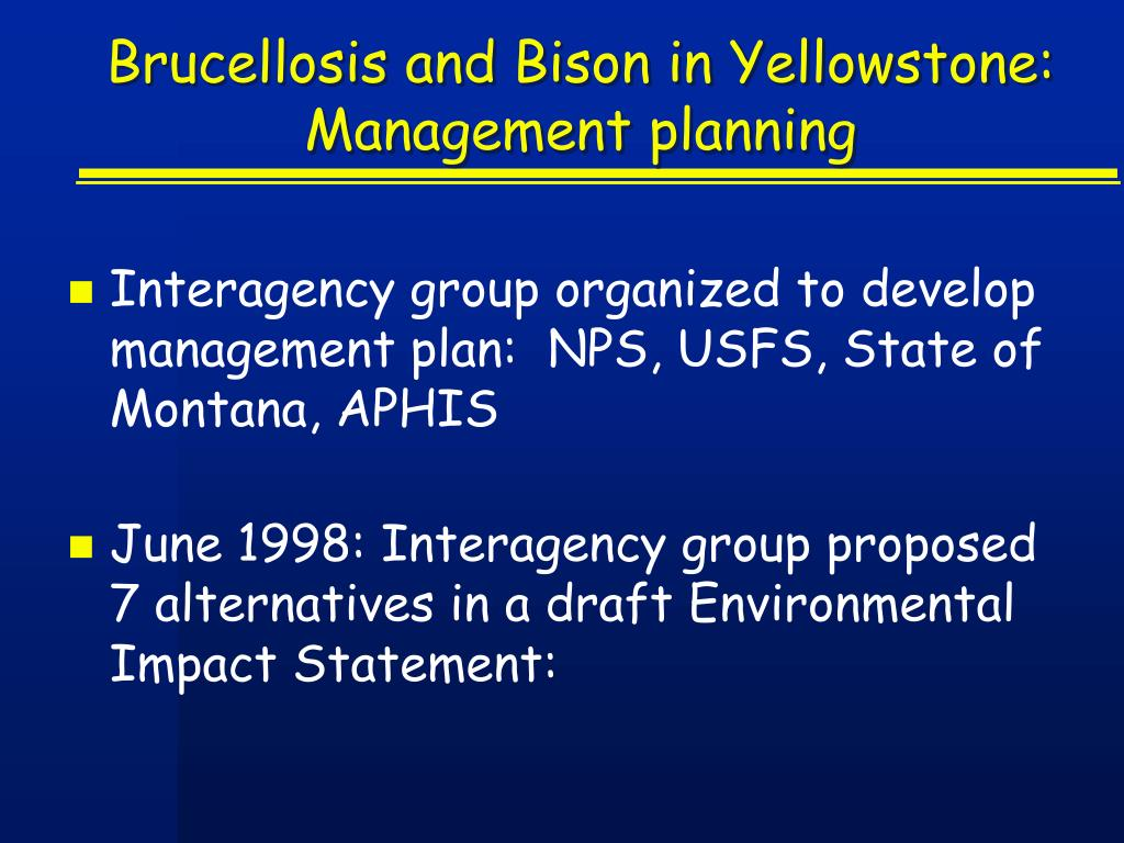 Brucellosis and Bison in Yellowstone:  Management planning