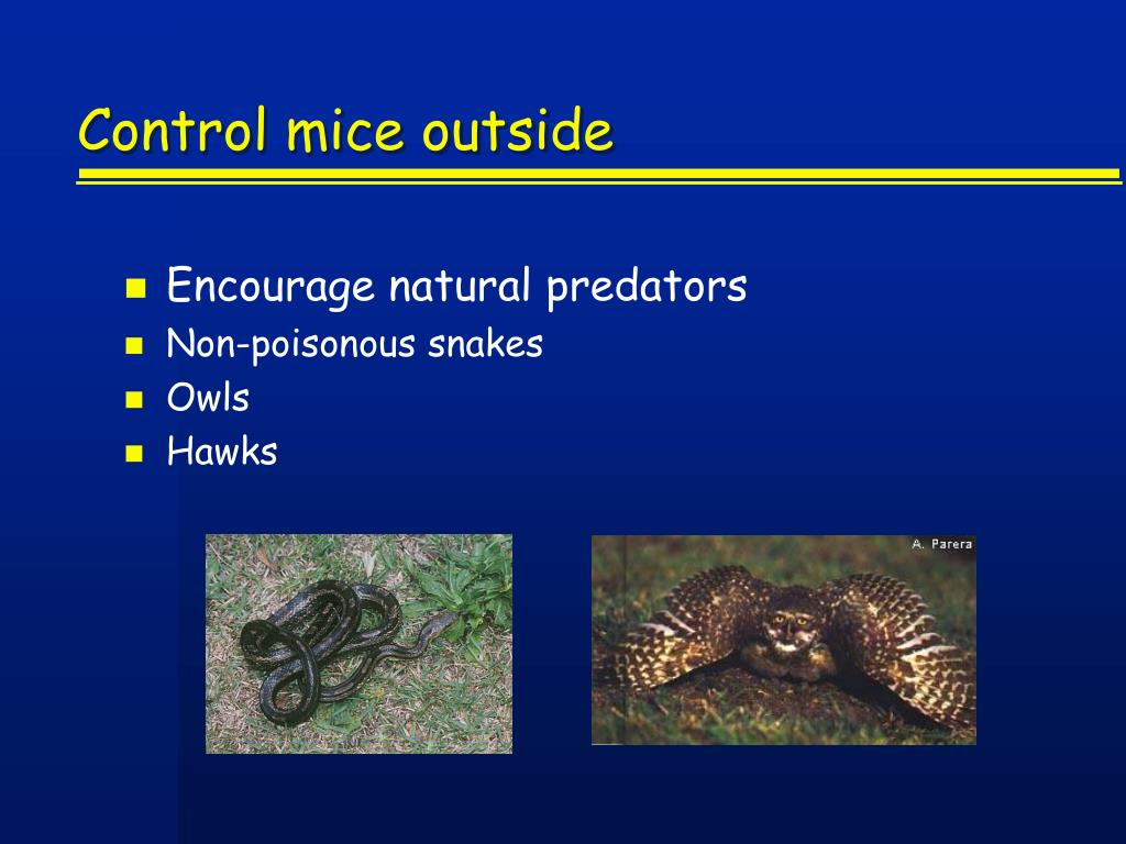 Control mice outside