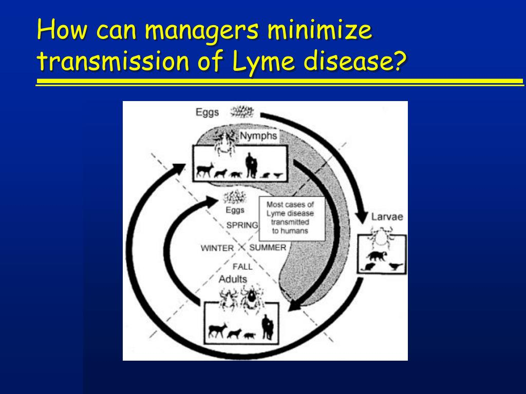 How can managers minimize transmission of Lyme disease?