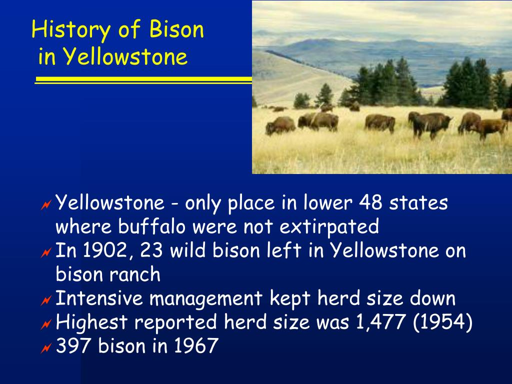 History of Bison