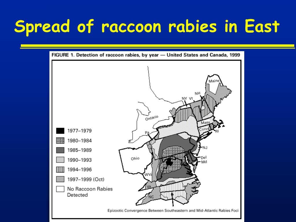 Spread of raccoon rabies in East