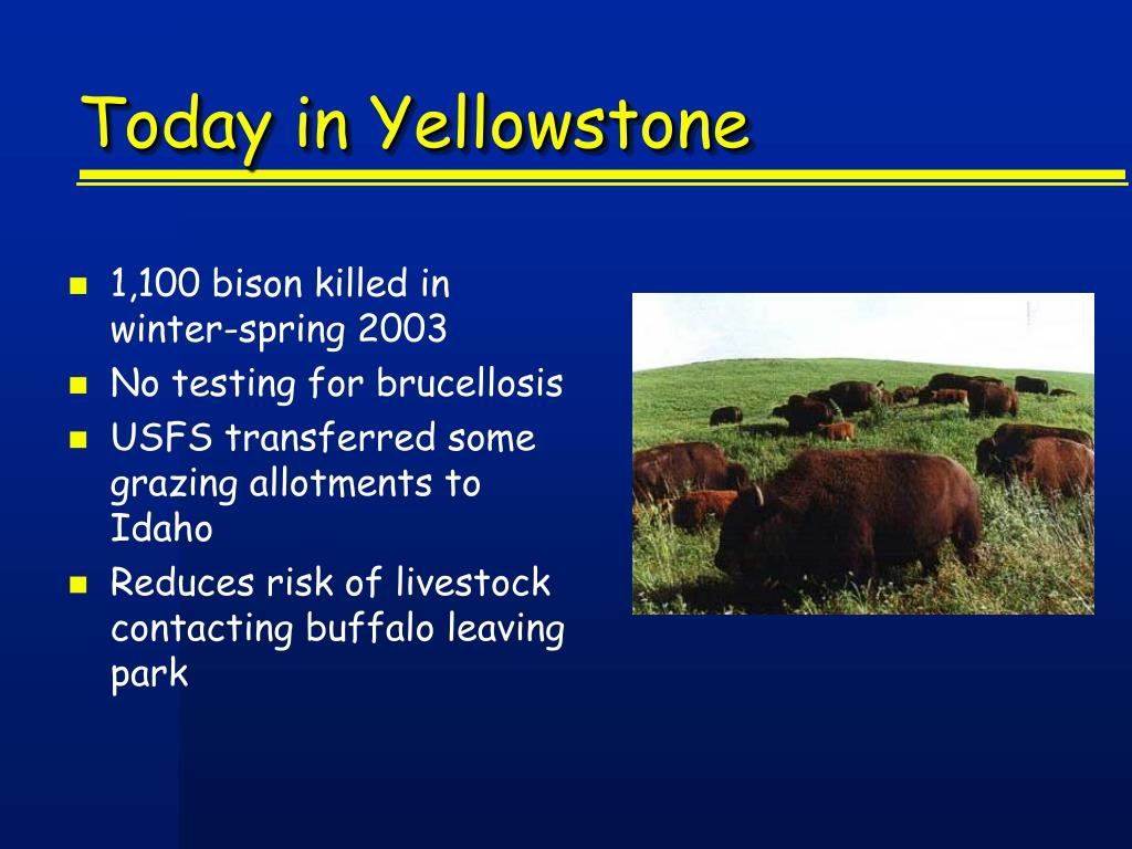 Today in Yellowstone