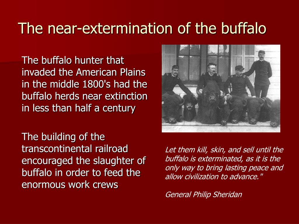 The near-extermination of the buffalo