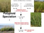 polyploid speciation