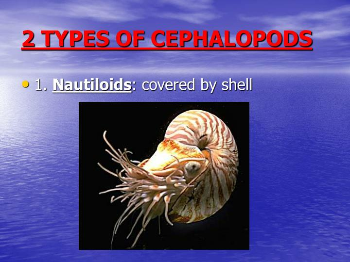 2 TYPES OF CEPHALOPODS