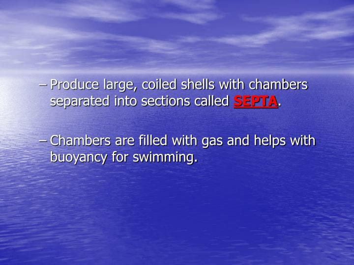 Produce large, coiled shells with chambers separated into sections called