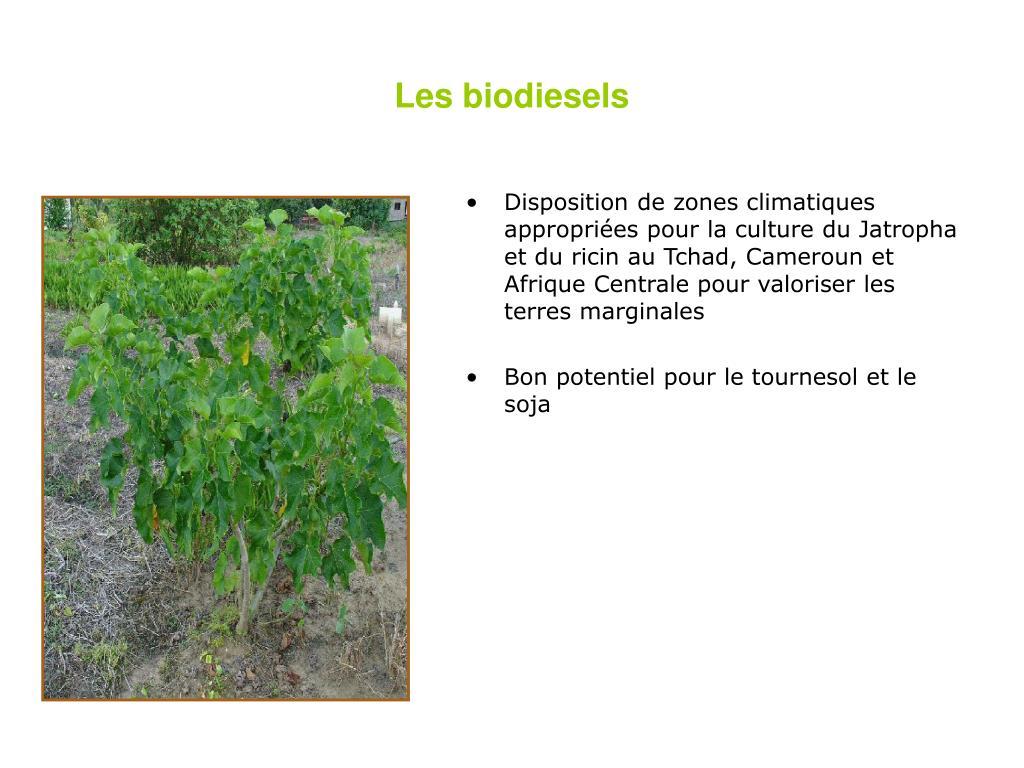 Les biodiesels