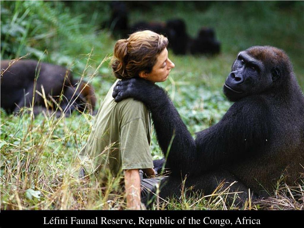 Léfini Faunal Reserve, Republic of the Congo, Africa