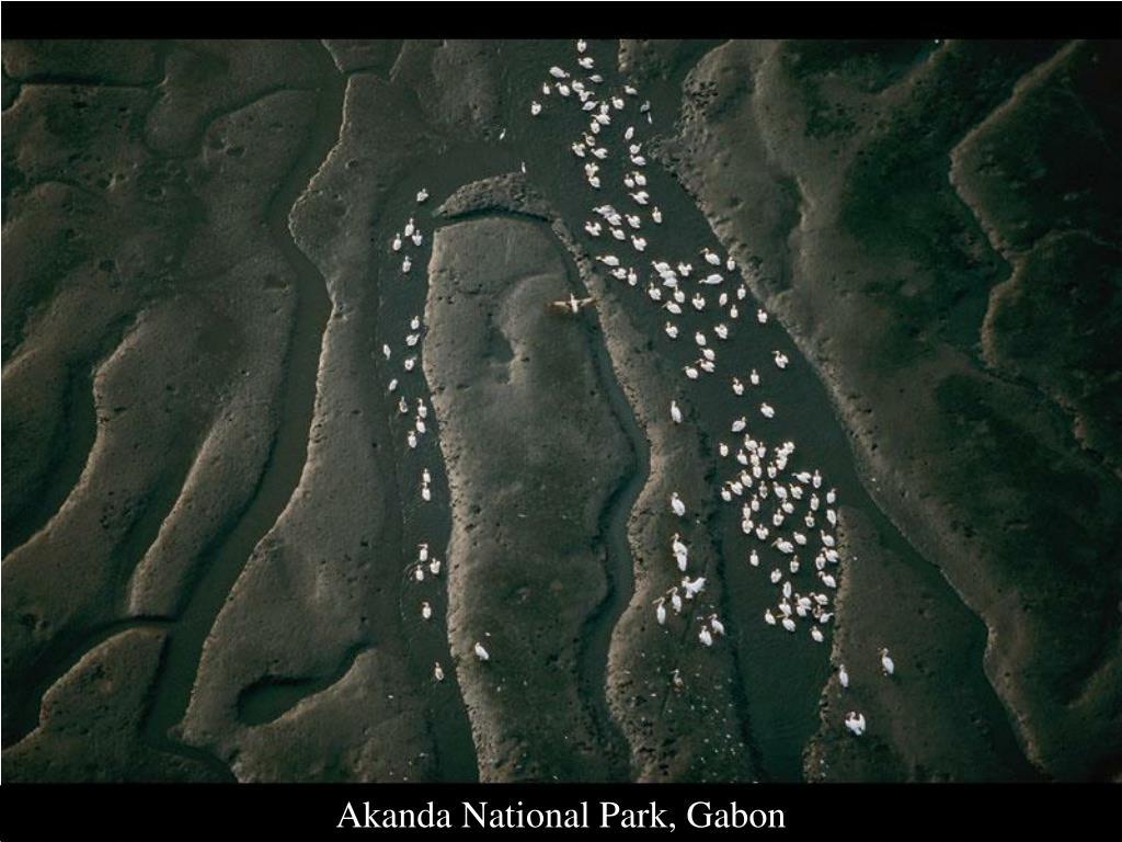 Akanda National Park, Gabon