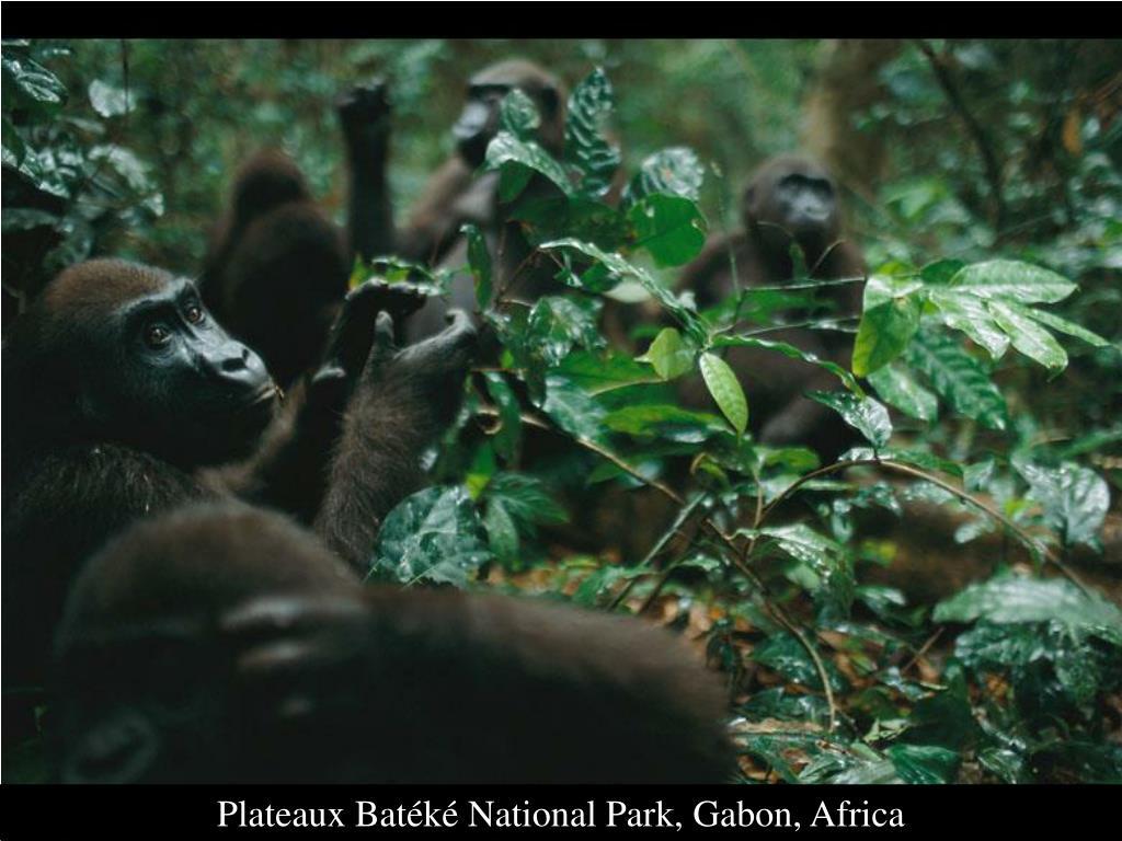 Plateaux Batéké National Park, Gabon, Africa