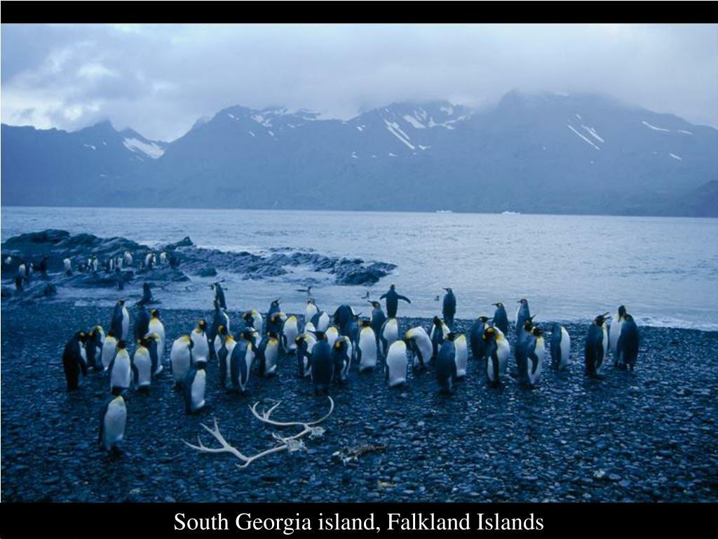 South Georgia island, Falkland Islands