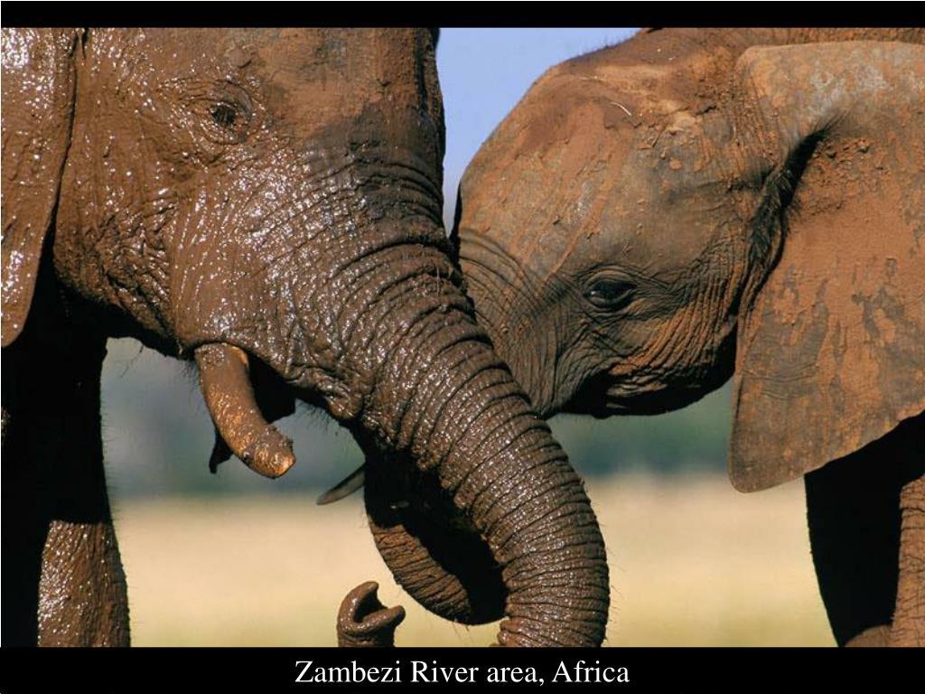 Zambezi River area, Africa