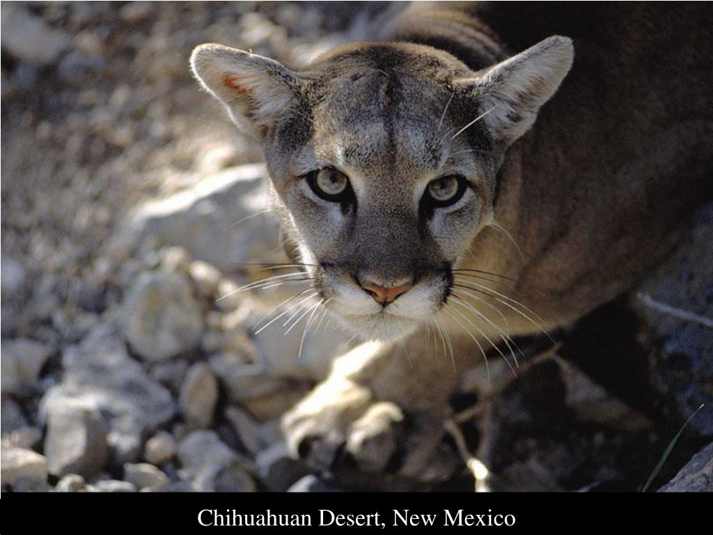 Chihuahuan Desert, New Mexico