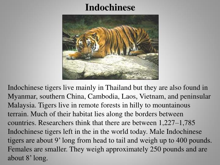 Indochinese