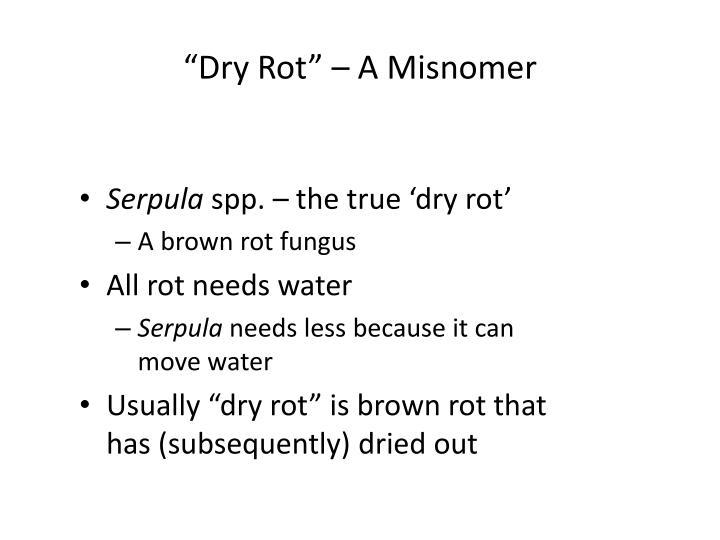 """""""Dry Rot"""