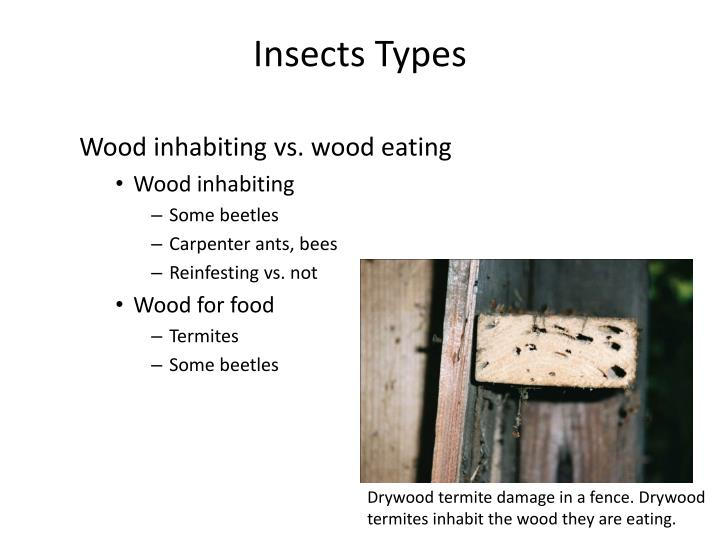 Insects Types