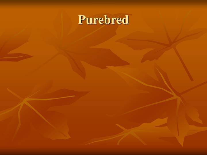 Purebred