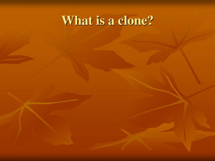 What is a clone?