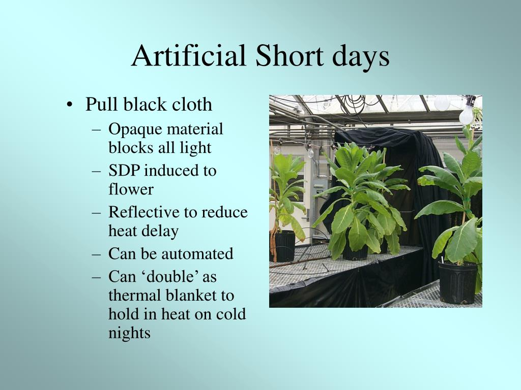 Artificial Short days