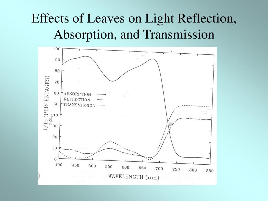 Effects of Leaves on Light Reflection, Absorption, and Transmission