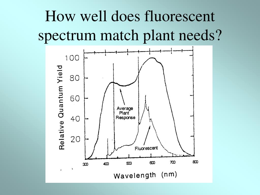 How well does fluorescent spectrum match plant needs?