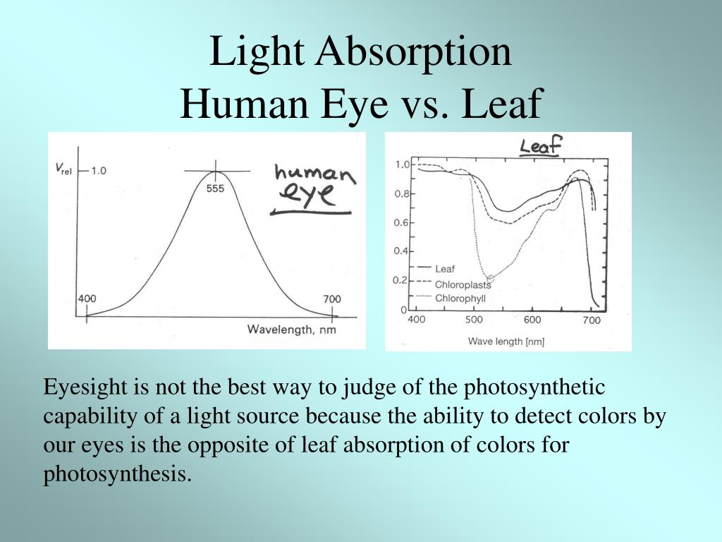 Light Absorption