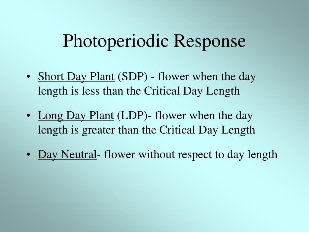 Photoperiodic Response