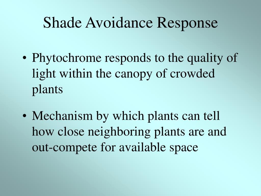 Shade Avoidance Response